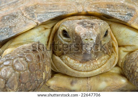 Young overland turtle - stock photo