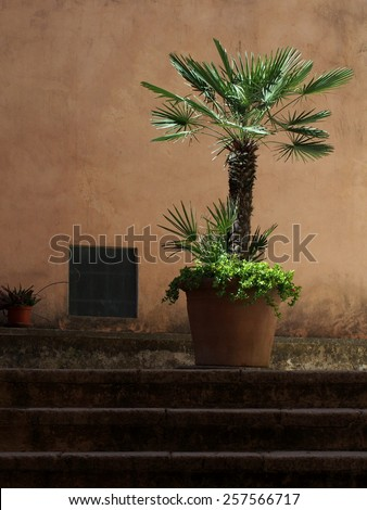 Young palm tree with lime wall on the background - stock photo