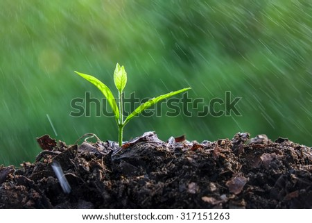 Young plant - stock photo