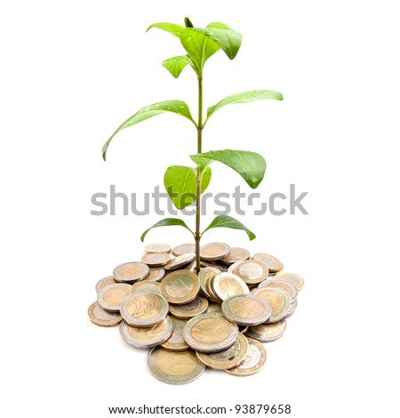Young plant growing from coins - stock photo