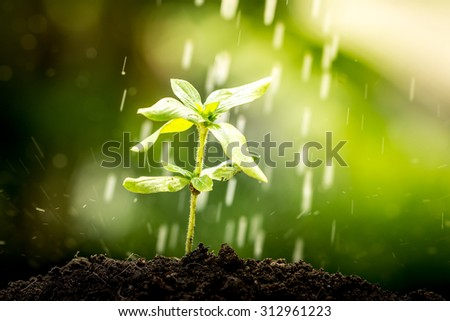 Young plant growing in soil on water drop  background - stock photo