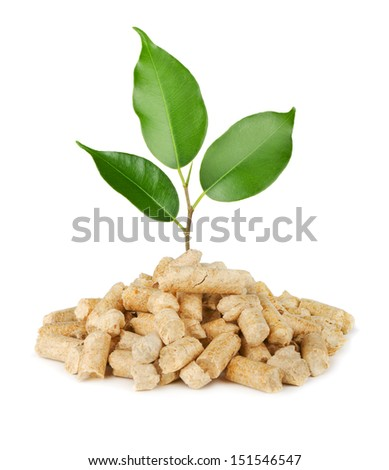 Young plant growing out of wood pellets isolated on white - stock photo