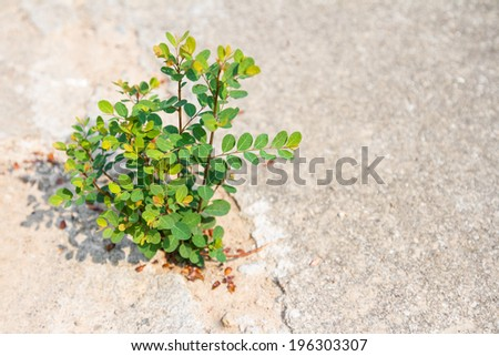 Young plant growing through crack in concrete pavement - stock photo