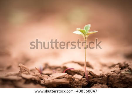 Young plant growing up on crack earth, Global warming theme green grass rising on burned cracked ground - stock photo