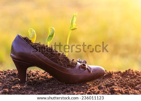 Young plant growth in lady shoe, recycle concept - stock photo