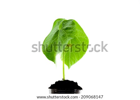 Young plant in a glass with soil, crop genetic research - stock photo
