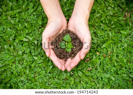 Young plant in hand against green nature background - stock photo