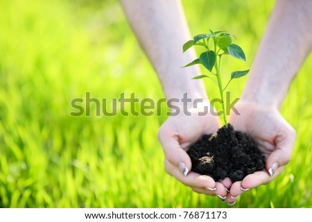 Young plant in hand against green nature background. Shallow depth of field - stock photo
