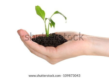 Young plant in hand isolated on white - stock photo