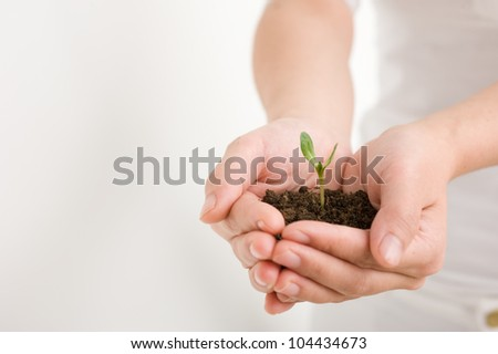 Young plant in hand over white - stock photo