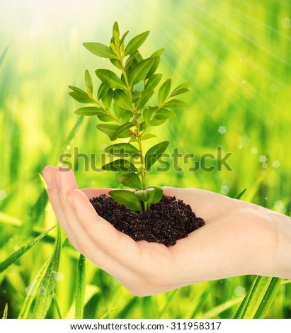 Young plant in hand with soil on green grass background - stock photo