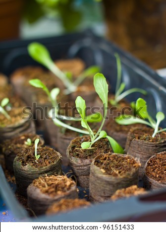 young plant in nursery - stock photo