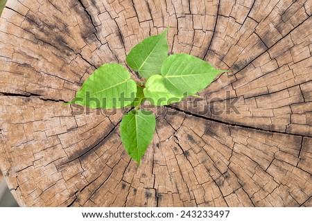 young plant in Old tree stump. - stock photo