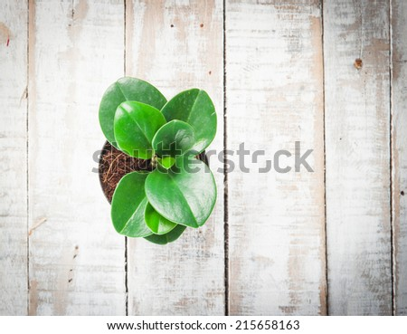 Young plant in pot on White wooden background - stock photo