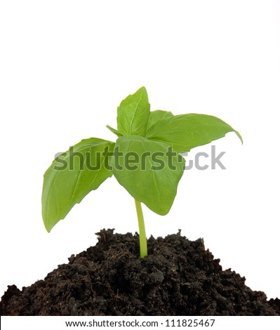 Young plant in the ground, isolated on white background - stock photo