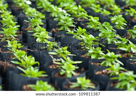 young plant in the nursery - stock photo