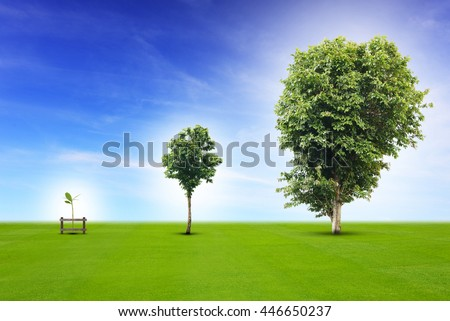 Young plant life process from small to medium size and growing up to growth big tree, metaphor to business concept in development, growing up economy, or life going on. - stock photo