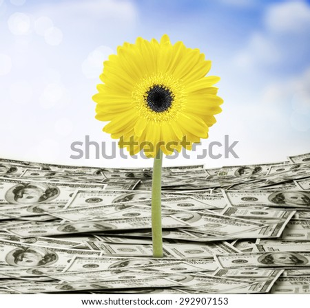 young plant money growth concept  - stock photo
