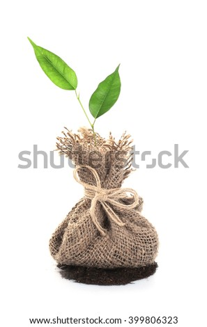 Young plant with ground in pouch, isolated on white - stock photo
