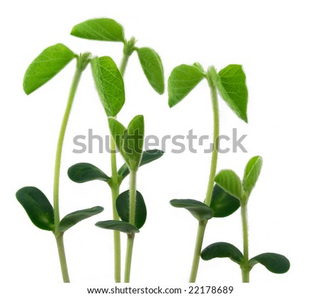 Young plants - stock photo