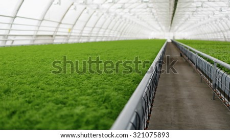 Young plants growing in very large plant commercial greenhouse - stock photo