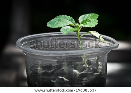 Young plants in plastic Cup - stock photo