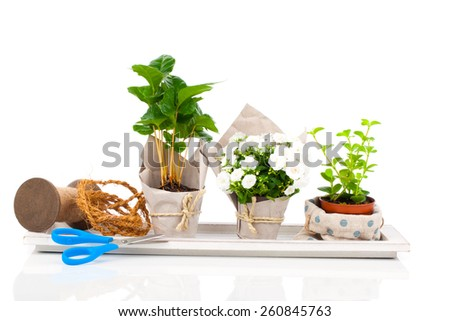 young plants in the package offered for sale, isolated on white background - stock photo