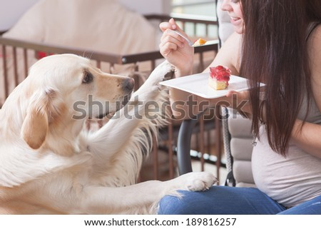 Young pregnant women with a sweet golden retriever is eating a strawberry cake.  - stock photo