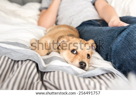 Young Puppy Falling Asleep After Playing with His Human - stock photo