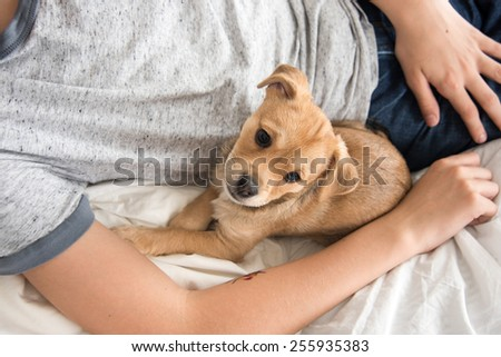 Young Puppy Looking Up While Playing on Bed - stock photo