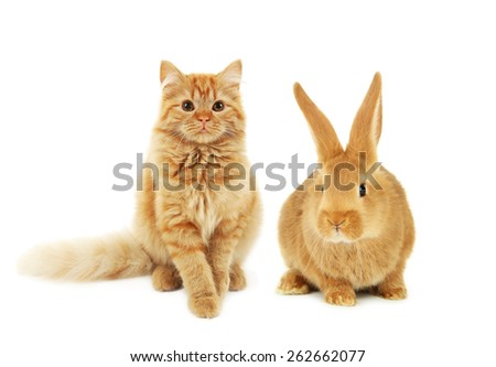 Young red rabbit and cat isolated on white - stock photo