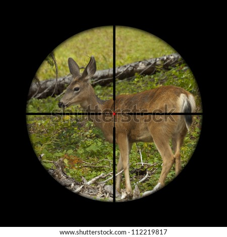 Young roe deer calf being targeted by a hunter with the cross hairs of the scope on his rifle - stock photo