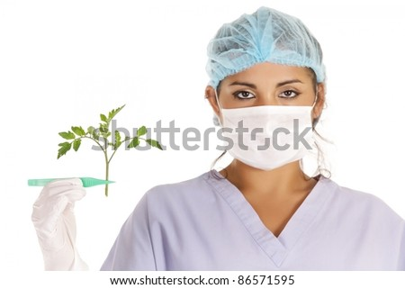 young scientist holding gmo tomato plant with pincers - stock photo