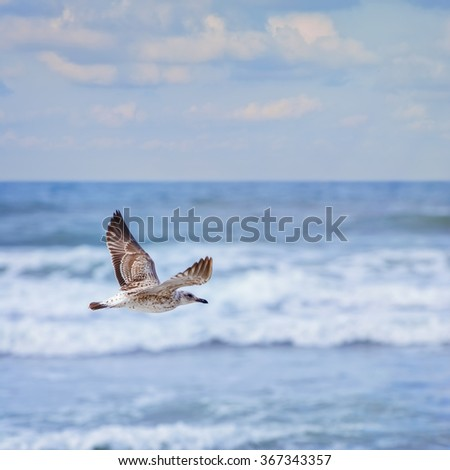 Young Seagull Flying over the Black Sea - stock photo