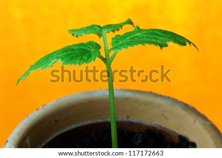Young seedling growing in a plant pot in spring - stock photo