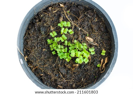 Young seedling growing in a soil - stock photo
