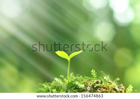 Young seedling growing in sunlight - stock photo
