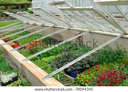 Young seedlings and bedding plants in glass frames - stock photo