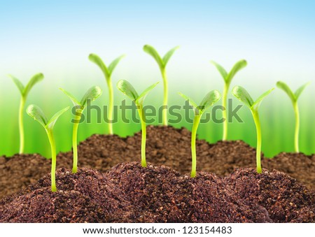 Young seedlings growing in a soil. - stock photo