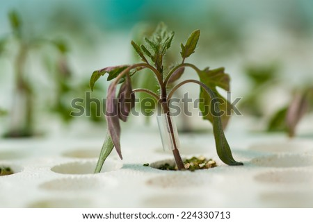 Young seedlings in tray - stock photo