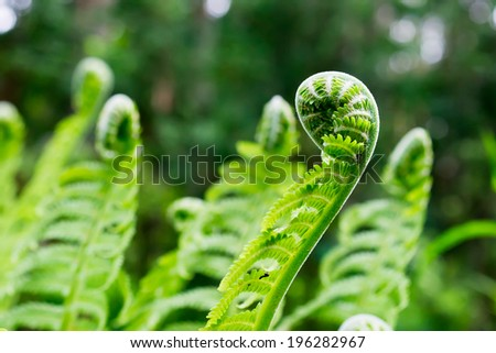 Young shoot of fern - stock photo