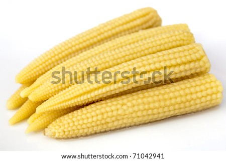 Young small corn closeup view - stock photo