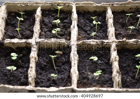Young spring seedlings  - stock photo