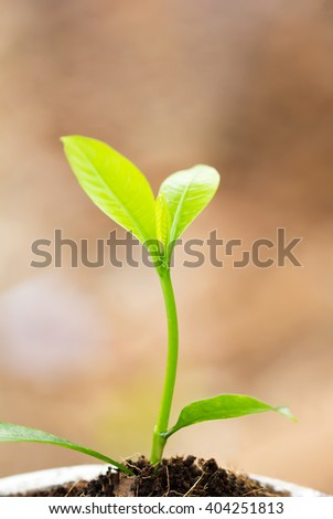 Young sprout - stock photo