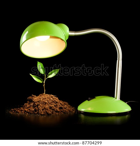 Young sprout and table lamp on a black background ... - stock photo