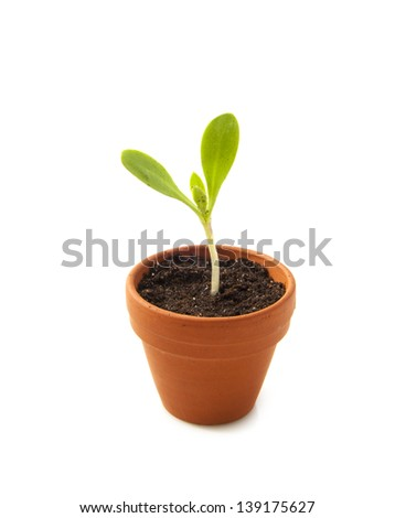 Young sprout growing in jar isolated over white - stock photo