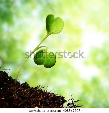 Young sprout on green background - stock photo