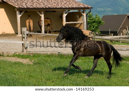 young stallion at the farm - stock photo