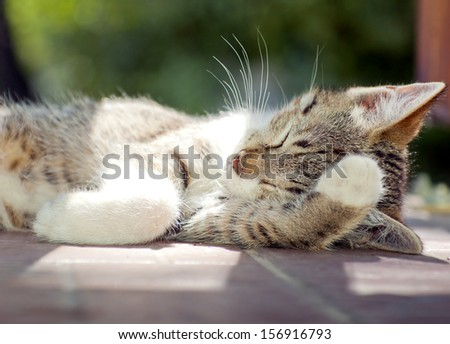 Young striped kitten sleeping or dreaming on the balcon - stock photo