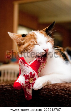 Young three-colored cat playing with Christmas decoration - stock photo